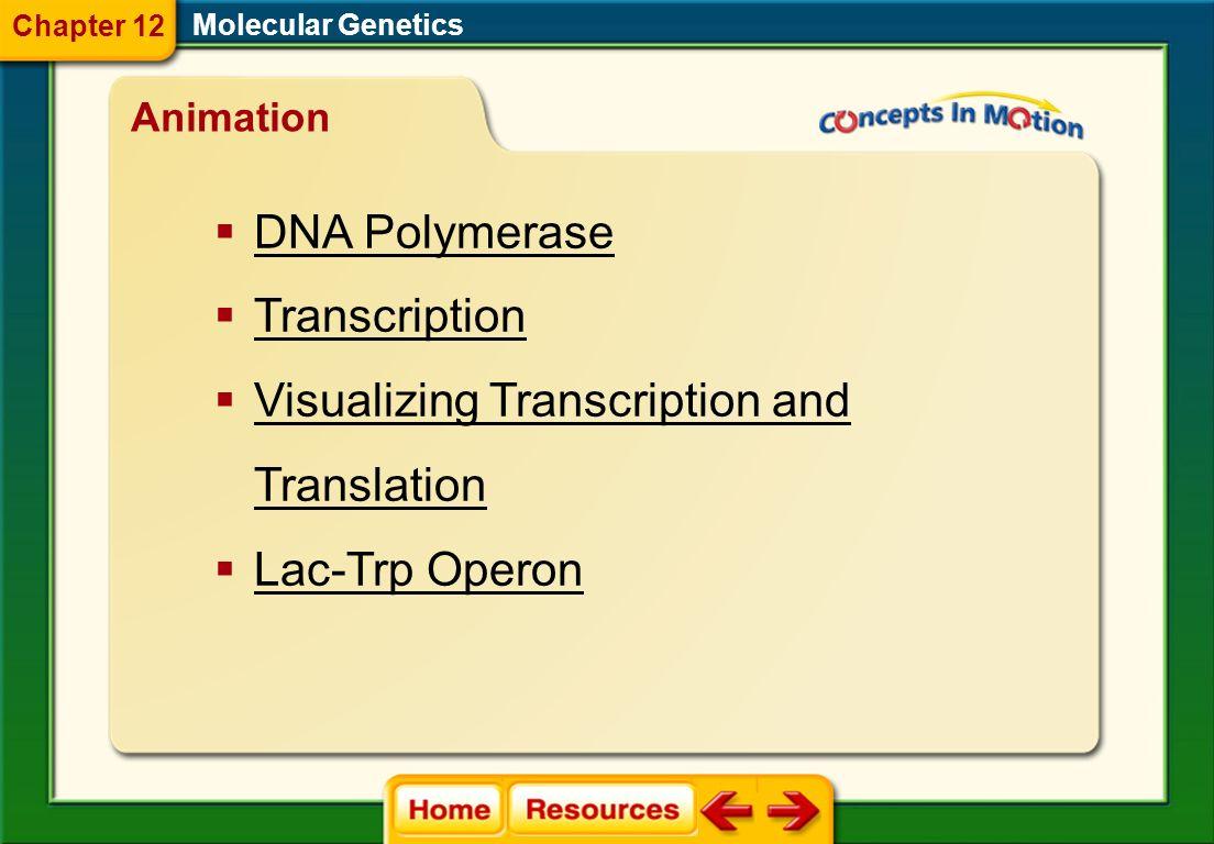gene regulation operon mutation mutagen Molecular Genetics Vocabulary Section 4 Chapter 12