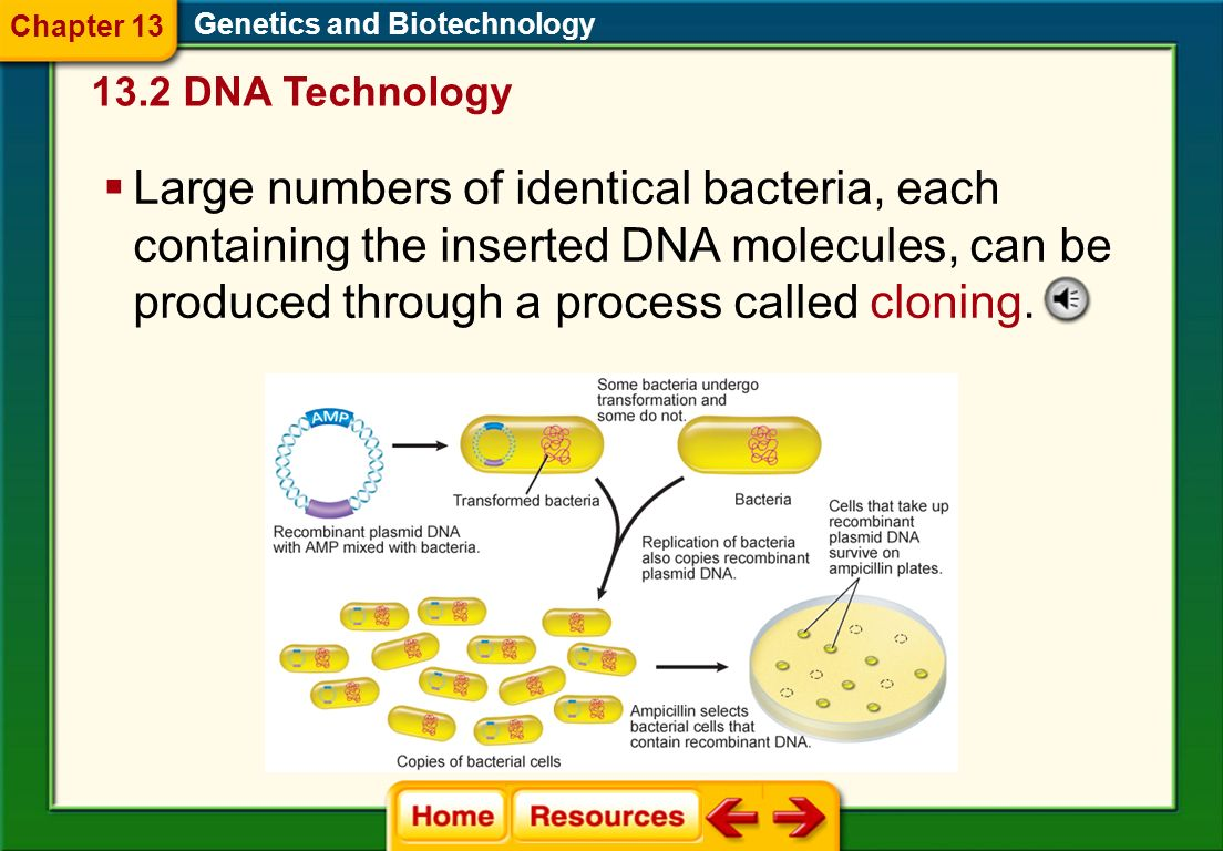 Genetics and Biotechnology To make a large quantity of recombinant plasmid DNA, bacterial cells are mixed with recombinant plasmid DNA. Some of the ba