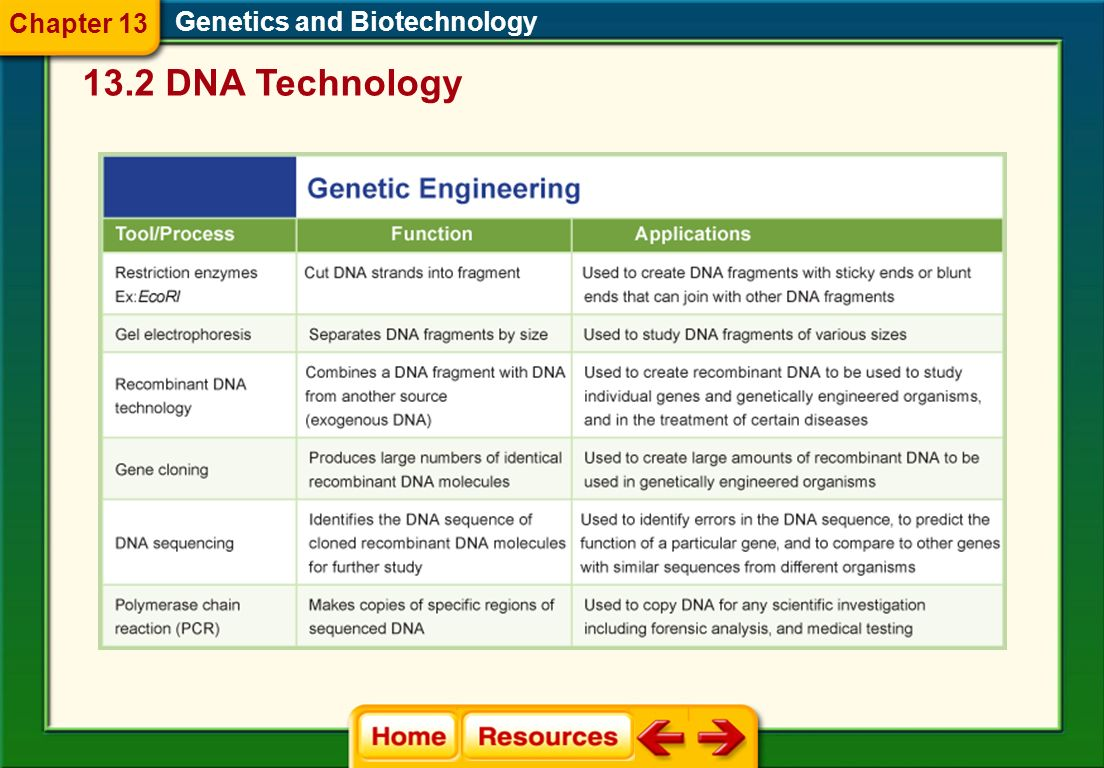 Genetics and Biotechnology 13.2 DNA Technology PCR Analysis Chapter 13 A technique called the polymerase chain reaction (PCR) can be used to make mill