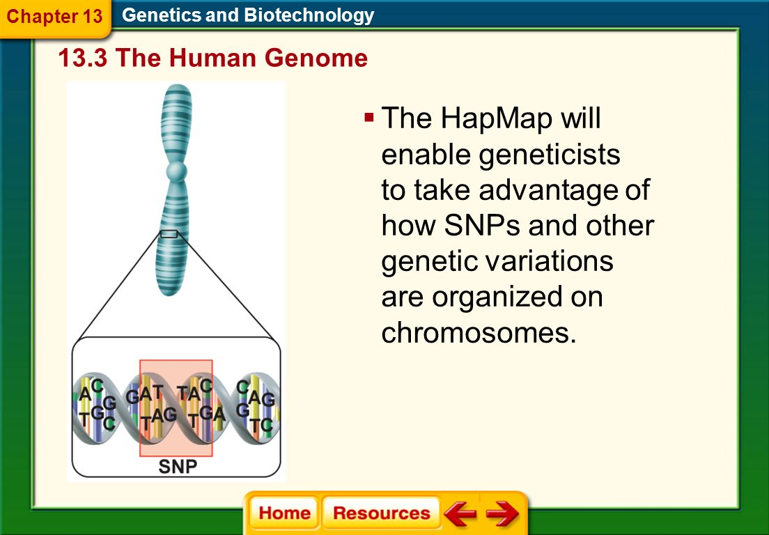 Regions of linked variations in the human genome are known as haplotypes. Genetics and Biotechnology Assembling the HapMap involves identifying groups