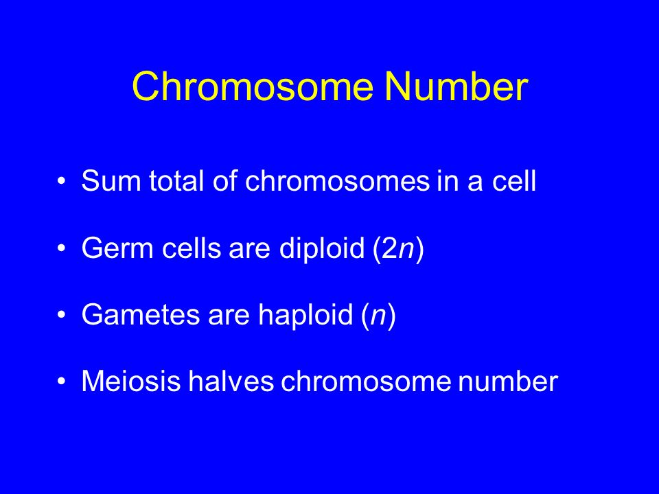 Chromosome Number Sum total of chromosomes in a cell Germ cells are diploid (2n) Gametes are haploid (n) Meiosis halves chromosome number