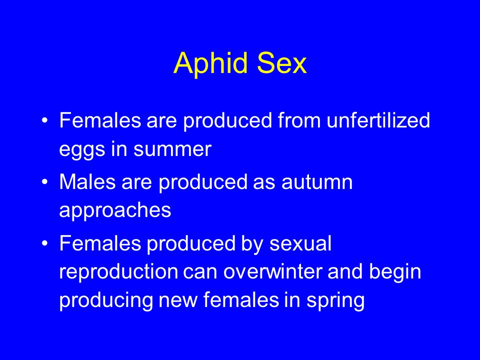 Aphid Sex Females are produced from unfertilized eggs in summer Males are produced as autumn approaches Females produced by sexual reproduction can ov