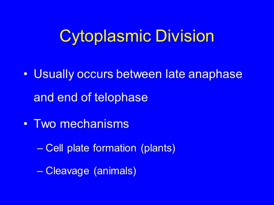 Cytoplasmic Division Usually occurs between late anaphase and end of telophase Two mechanisms –Cell plate formation (plants) –Cleavage (animals)