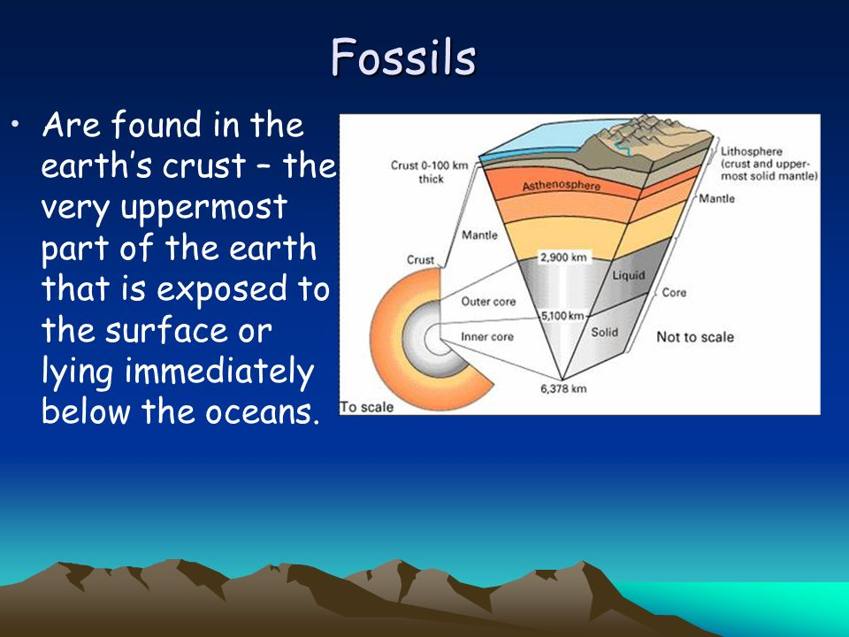 Evidence of Evolution: The Fossil Record Fossils Reading the Fossil Record Gaps in the Fossil Record Vestigial Structures