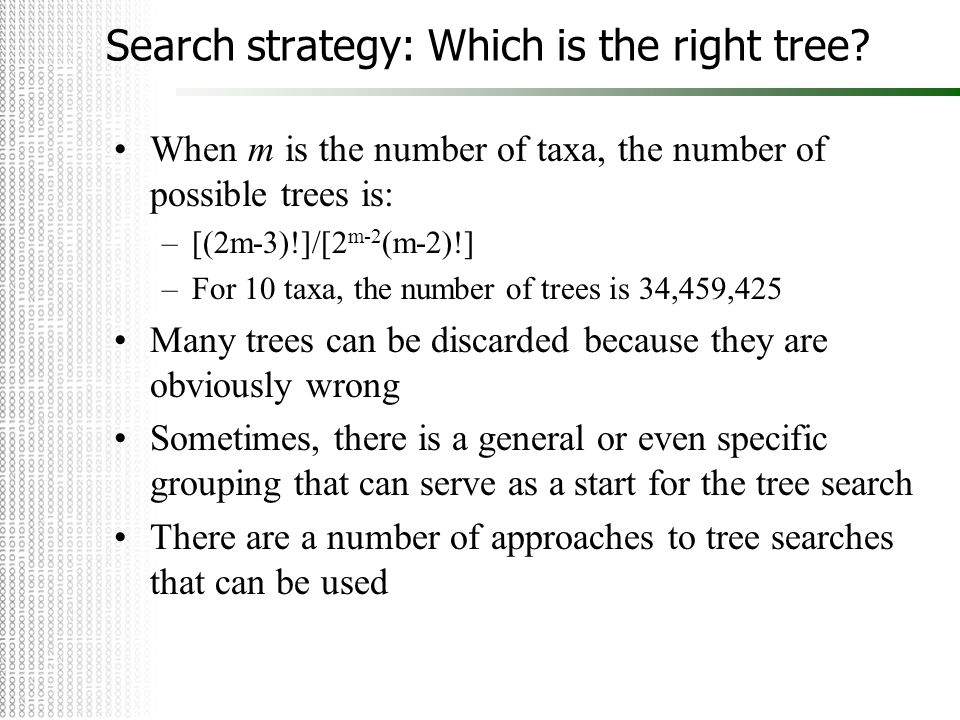 Search strategy: Which is the right tree? When m is the number of taxa, the number of possible trees is: –[(2m-3)!]/[2 m-2 (m-2)!] –For 10 taxa, the n