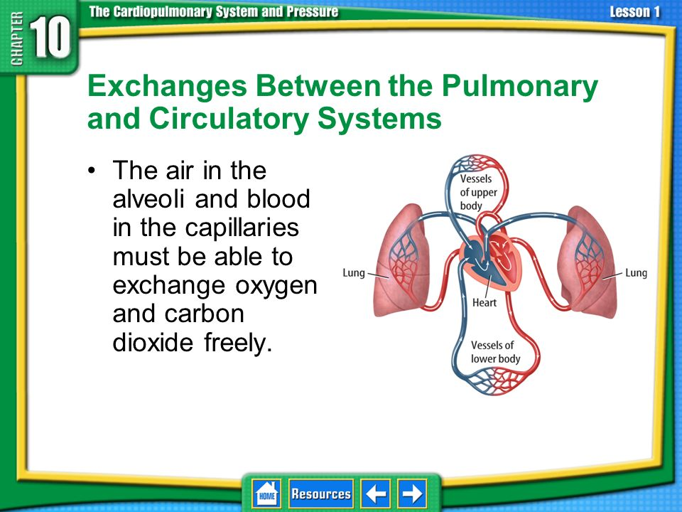 Stroke A stroke is the death of brain tissue. 10.1 The Pulmonary- Circulatory System