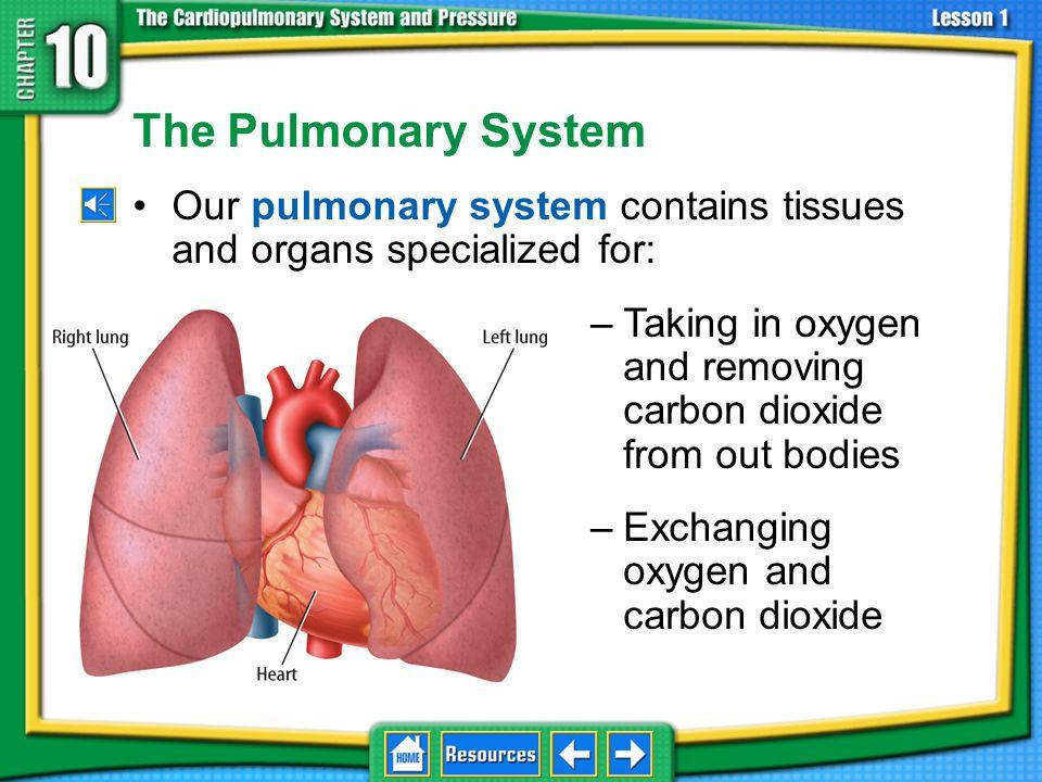 pulmonary system breathing lungs pneumonia suffocation asthma circulatory system atrium 10.1 The Pulmonary-Circulatory System ventricle artery capilla