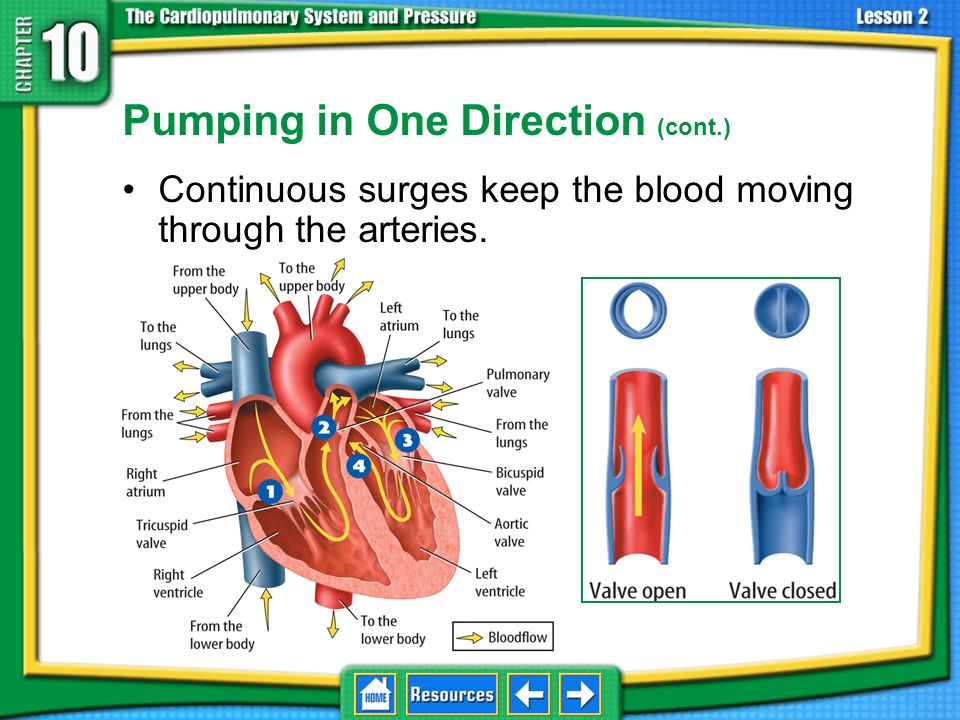 Pumping in One Direction It is important for blood to move in one direction as the heart pumps. 10.1 Pressure and the Body The contractions of the hea