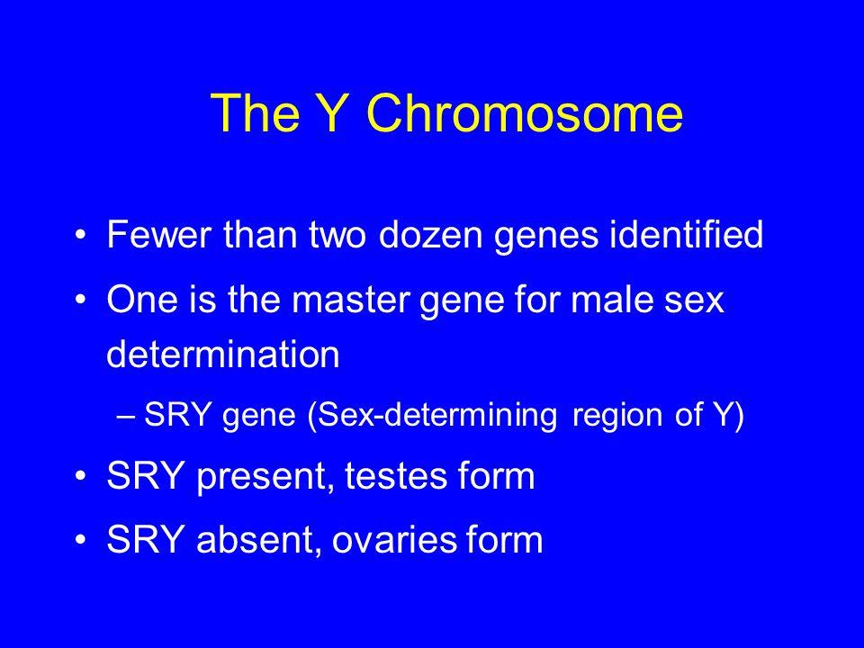 Chromosomes and Human Genetics Chapter 15. Chromosomes & Cancer Some ...: slideplayer.com/slide/754124