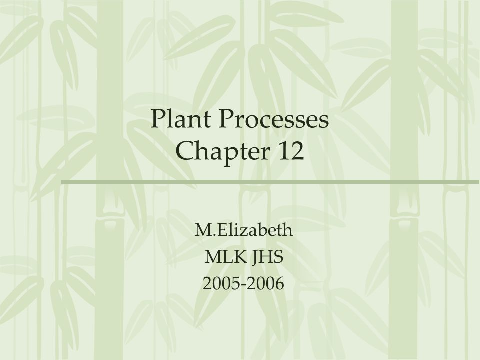 Plant Processes Chapter 12 M.Elizabeth MLK JHS 2005-2006