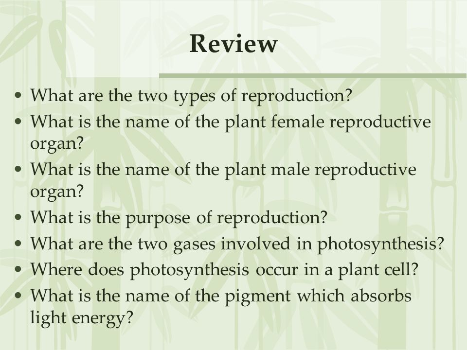 Review What are the two types of reproduction.