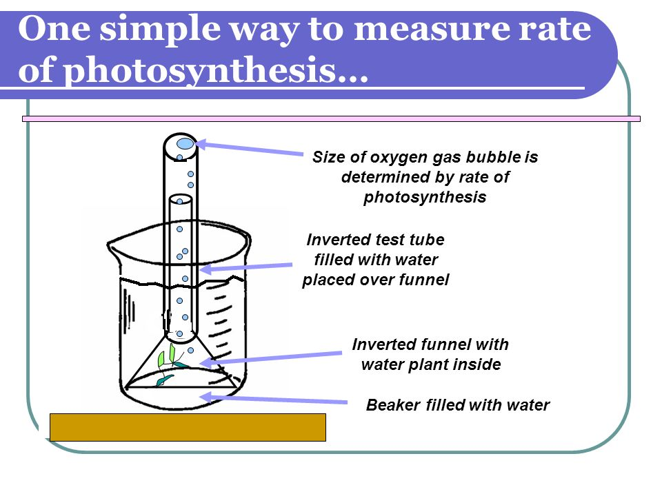 One simple way to measure rate of photosynthesis… Inverted funnel with water plant inside Inverted test tube filled with water placed over funnel Size