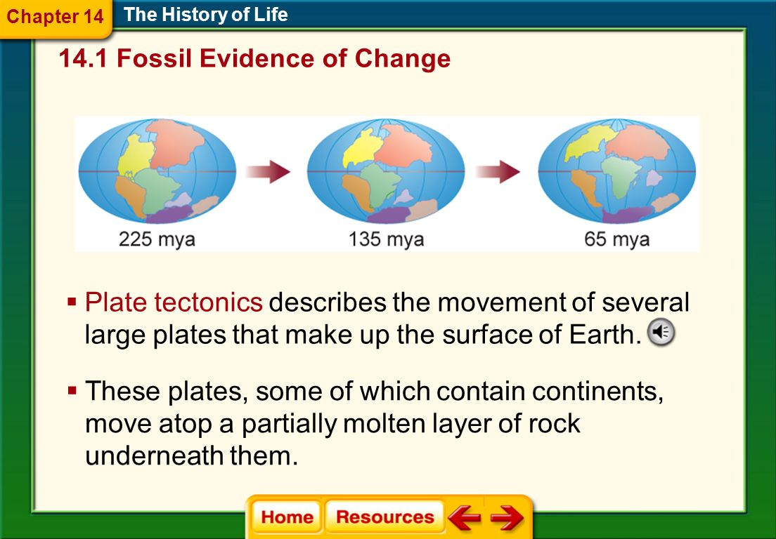 The Mesozoic Era (Triassic, Jurassic, Cretaceous) The History of Life Mammals and dinosaurs first appeared late in the Triassic period, and flowering plants evolved from nonflowering plants.