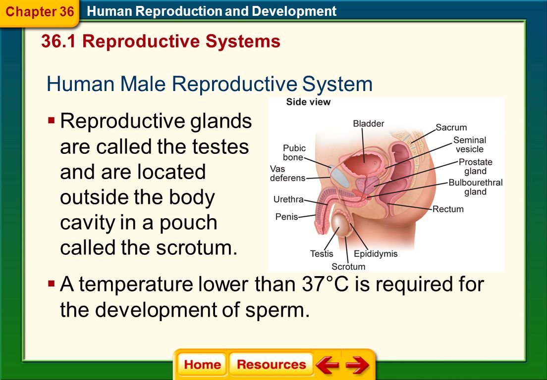 Click on a lesson name to select. Section 1: Reproductive Systems Section 2: Human Development Before Birth Section 3: Birth, Growth, and Aging Chapte