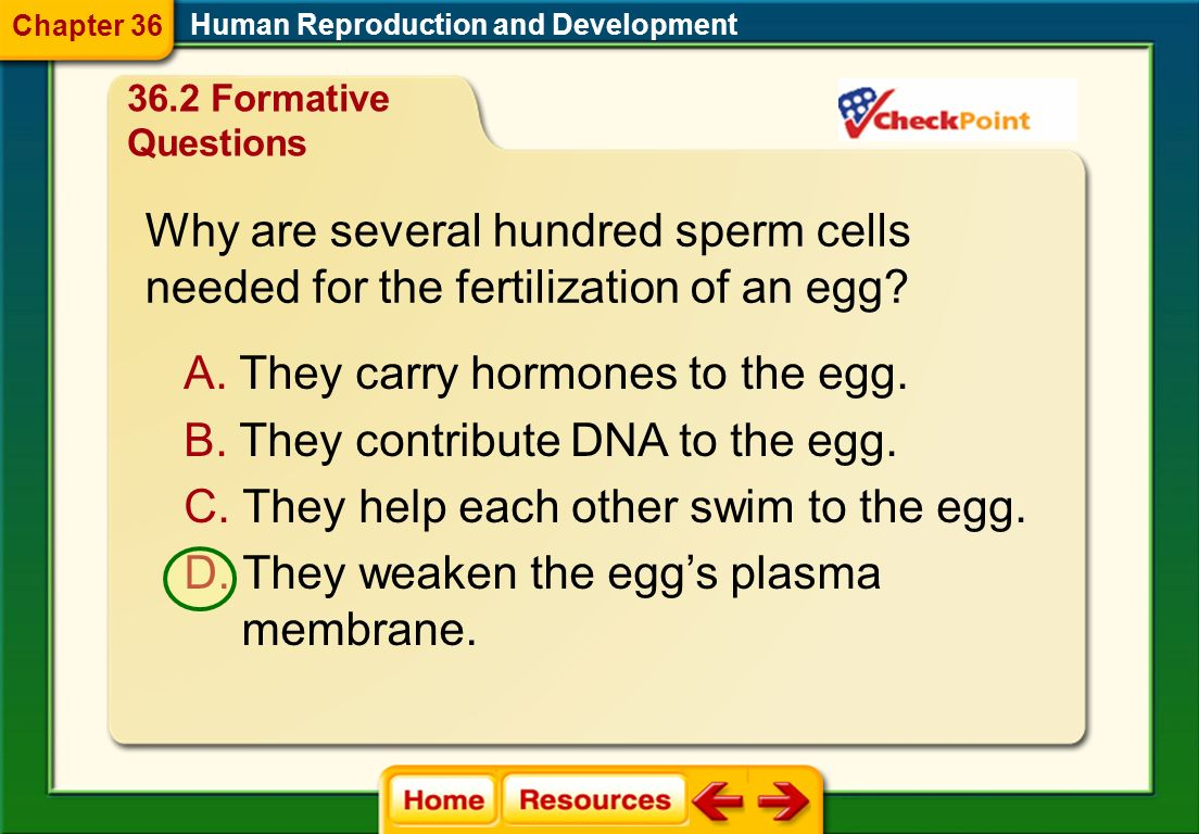Human Reproduction and Development True or False In order for sperm cells to enter a females reproductive system during intercourse, there must be a s