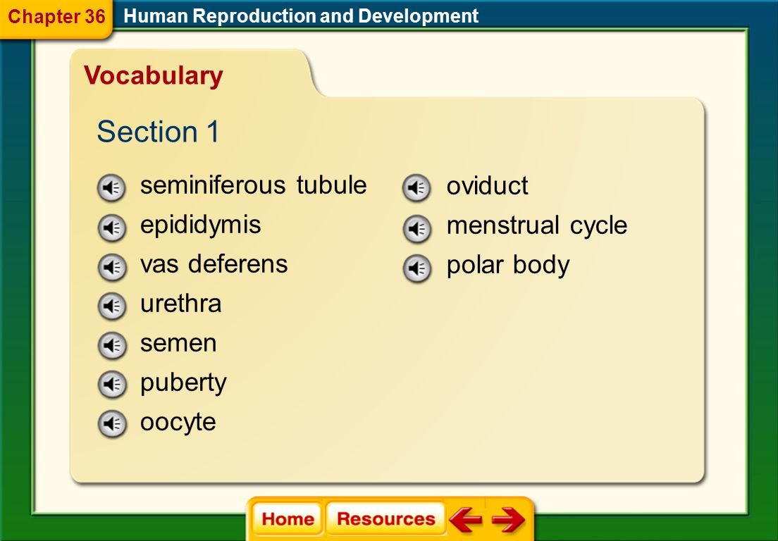 Human Reproduction and Development Image Bank Chapter 36