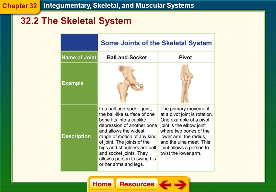 Integumentary, Skeletal, and Muscular Systems Chapter 32