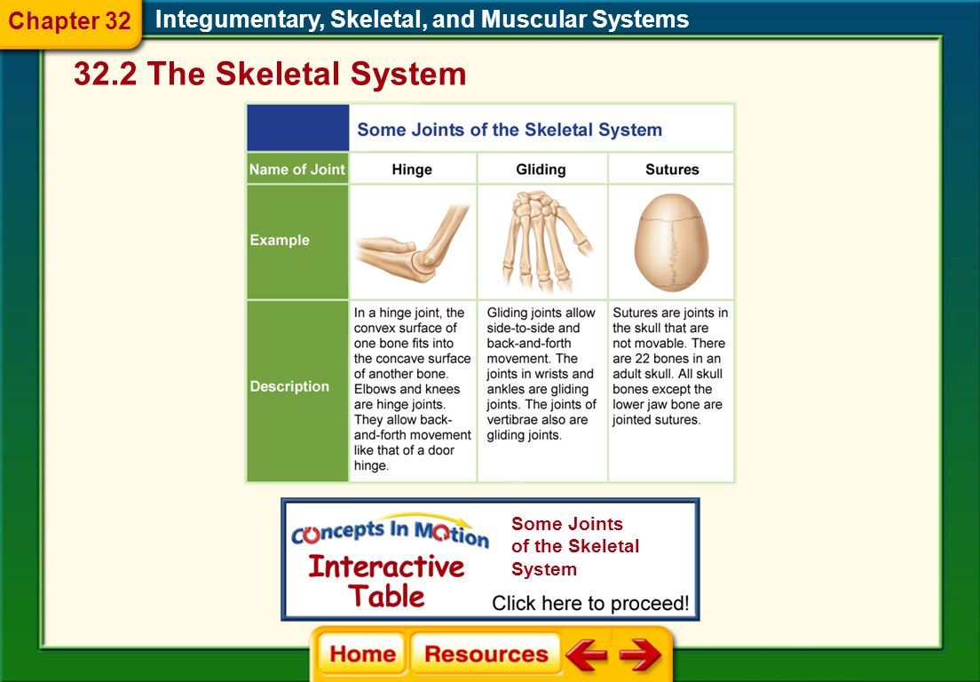 Integumentary, Skeletal, and Muscular Systems 32.2 The Skeletal System Chapter 32