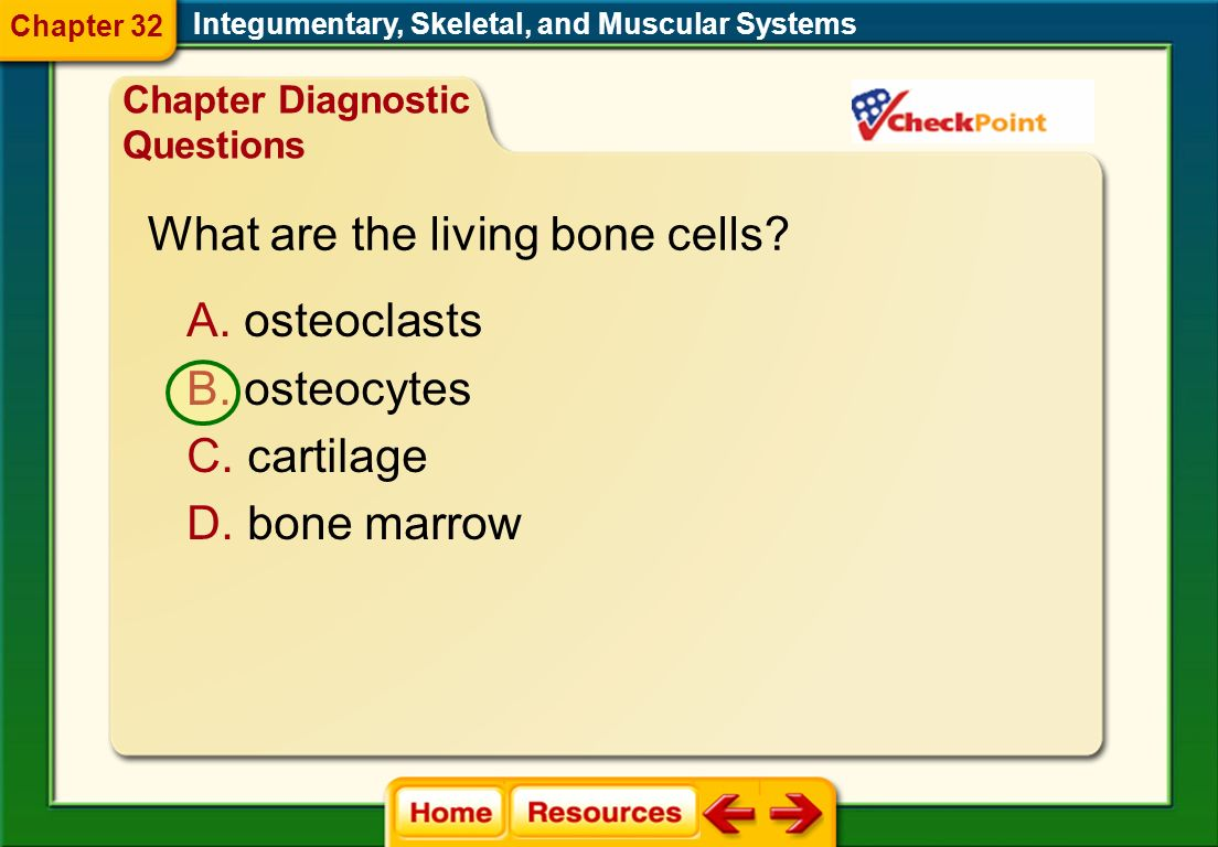 Integumentary, Skeletal, and Muscular Systems Chapter Resource Menu Chapter Diagnostic Questions Formative Test Questions Chapter Assessment Questions