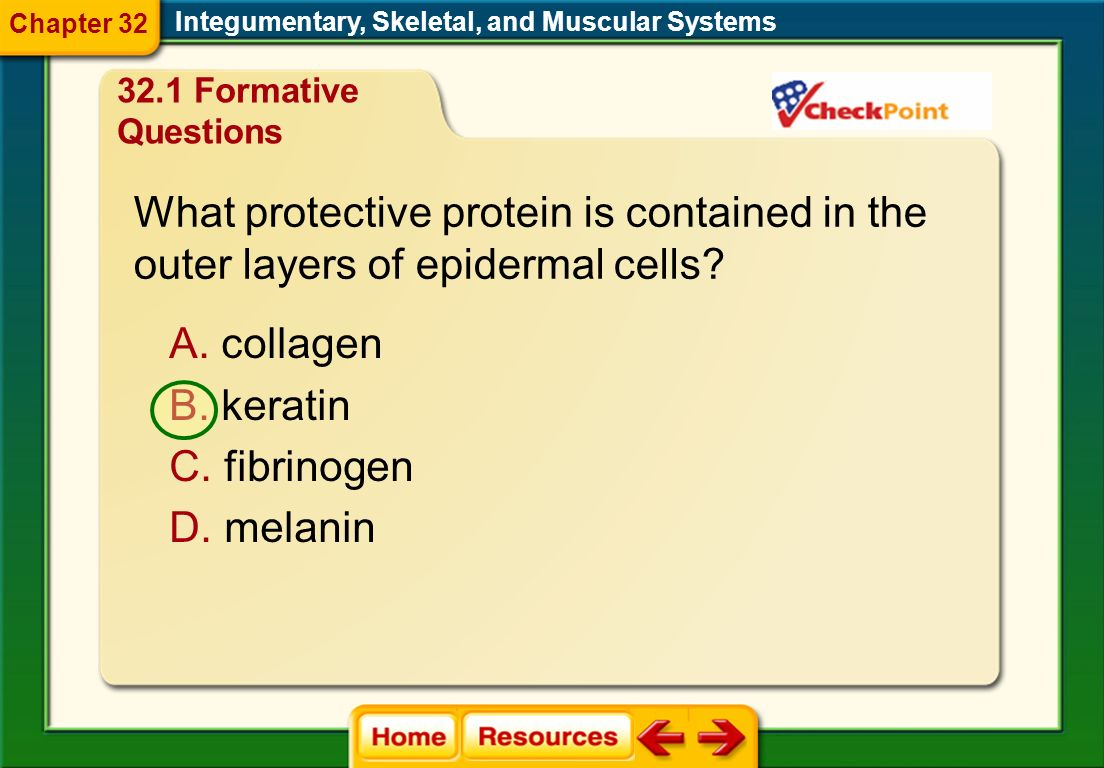 Which part of the muscle contracts? A. tendon B. myofibril C. sacromere D. ligament Integumentary, Skeletal, and Muscular Systems Chapter Diagnostic Q