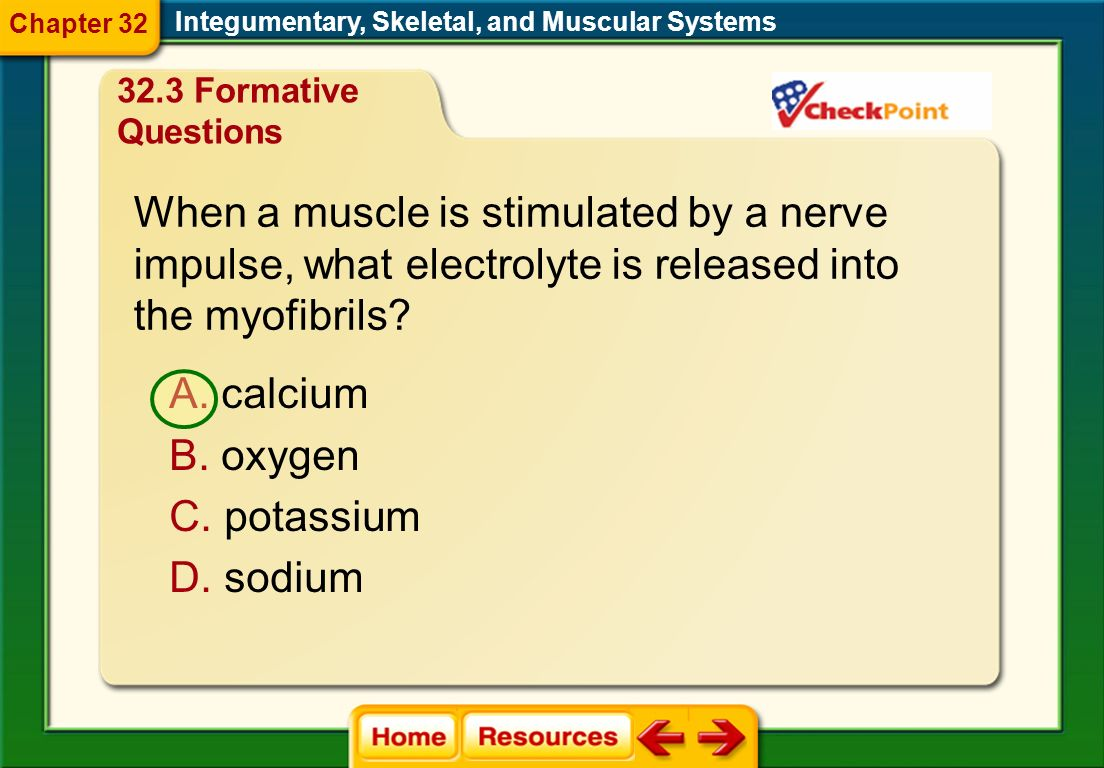 Which represents the levels of organization of skeletal muscle from larger to smaller units? Integumentary, Skeletal, and Muscular Systems B. filament