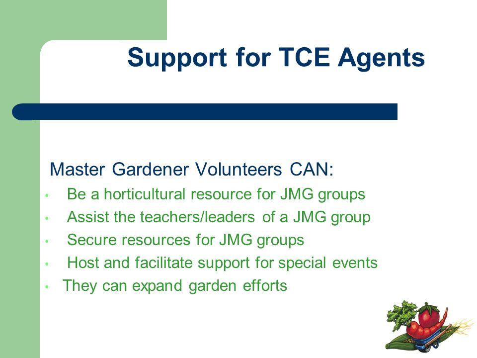 Master Gardener Volunteers CAN: Be a horticultural resource for JMG groups Assist the teachers/leaders of a JMG group Secure resources for JMG groups Host and facilitate support for special events They can expand garden efforts Support for TCE Agents