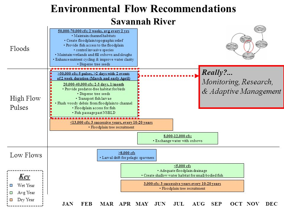 JANFEBMARAPRMAYJUNJULAUGSEPOCTNOVDEC Environmental Flow Recommendations Savannah River Low Flows High Flow Pulses Floods 3,000 cfs; 3 successive years every 10-20 years Floodplain tree recruitment <5,000 cfs Adequate floodplain drainage Create shallow water habitat for small-bodied fish >8,000 cfs Larval drift for pelagic spawners 50,000-70,000 cfs; 2 weeks, avg every 2 yrs Maintain channel habitats Create floodplain topographic relief Provide fish access to the floodplain control invasive species Maintain wetlands and fill oxbows and sloughs Enhance nutrient cycling & improve water clarity Disperse tree seeds <13,000 cfs; 3 successive years, every 10-20 years Floodplain tree recruitment 8,000-12,000 cfs; Exchange water with oxbows 20,000-40,000 cfs; 2-3 days, 1/month Provide predator-free habitat for birds Disperse tree seeds Transport fish larvae Flush woody debris from floodplain to channel Floodplain access for fish Fish passage past NSBLD >30,000 cfs; 5 pulses, >2 days with 2 events of 2 week duration (March and early April) Key Dry Year Avg Year Wet Year Really ...
