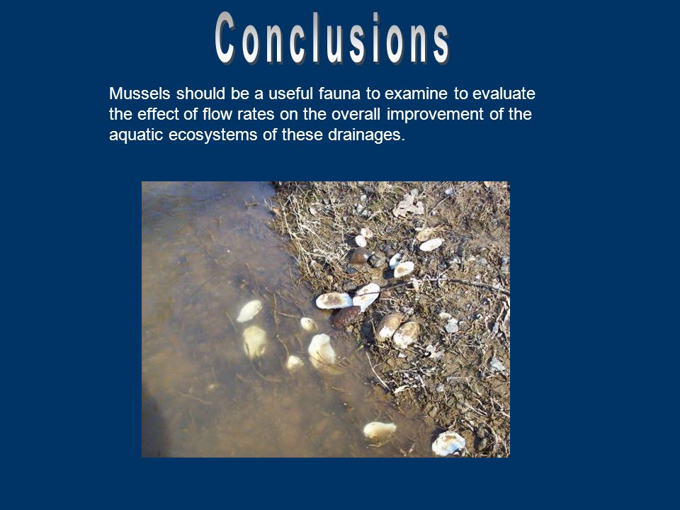 Mussels should be a useful fauna to examine to evaluate the effect of flow rates on the overall improvement of the aquatic ecosystems of these drainages.