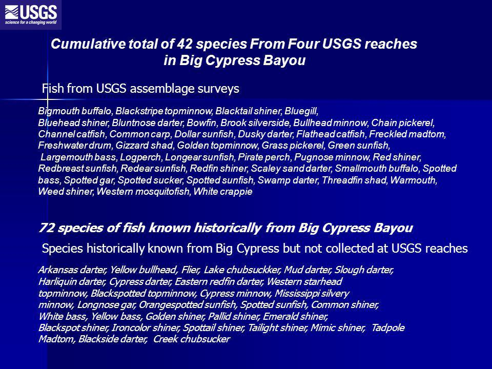 Cumulative total of 42 species From Four USGS reaches in Big Cypress Bayou Bigmouth buffalo, Blackstripe topminnow, Blacktail shiner, Bluegill, Bluehead shiner, Bluntnose darter, Bowfin, Brook silverside, Bullhead minnow, Chain pickerel, Channel catfish, Common carp, Dollar sunfish, Dusky darter, Flathead catfish, Freckled madtom, Freshwater drum, Gizzard shad, Golden topminnow, Grass pickerel, Green sunfish, Largemouth bass, Logperch, Longear sunfish, Pirate perch, Pugnose minnow, Red shiner, Redbreast sunfish, Redear sunfish, Redfin shiner, Scaley sand darter, Smallmouth buffalo, Spotted bass, Spotted gar, Spotted sucker, Spotted sunfish, Swamp darter, Threadfin shad, Warmouth, Weed shiner, Western mosquitofish, White crappie Arkansas darter, Yellow bullhead, Flier, Lake chubsuckker, Mud darter, Slough darter, Harliquin darter, Cypress darter, Eastern redfin darter, Western starhead topminnow, Blackspotted topminnow, Cypress minnow, Mississippi silvery minnow, Longnose gar, Orangespotted sunfish, Spotted sunfish, Common shiner, White bass, Yellow bass, Golden shiner, Pallid shiner, Emerald shiner, Blackspot shiner, Ironcolor shiner, Spottail shiner, Tailight shiner, Mimic shiner, Tadpole Madtom, Blackside darter, Creek chubsucker 72 species of fish known historically from Big Cypress Bayou Fish from USGS assemblage surveys Species historically known from Big Cypress but not collected at USGS reaches