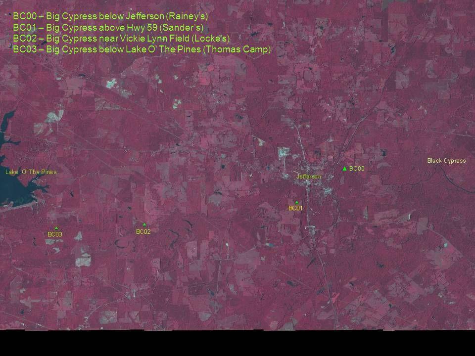 BC00 BC00 – Big Cypress below Jefferson (Raineys) BC01 – Big Cypress above Hwy 59 (Sanders) BC02 – Big Cypress near Vickie Lynn Field (Lockes) BC03 –