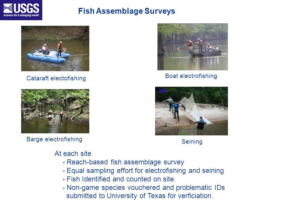 Fish Assemblage Surveys Cataraft electofishing Boat electrofishing Barge electrofishing Seining At each site - Reach-based fish assemblage survey - Eq