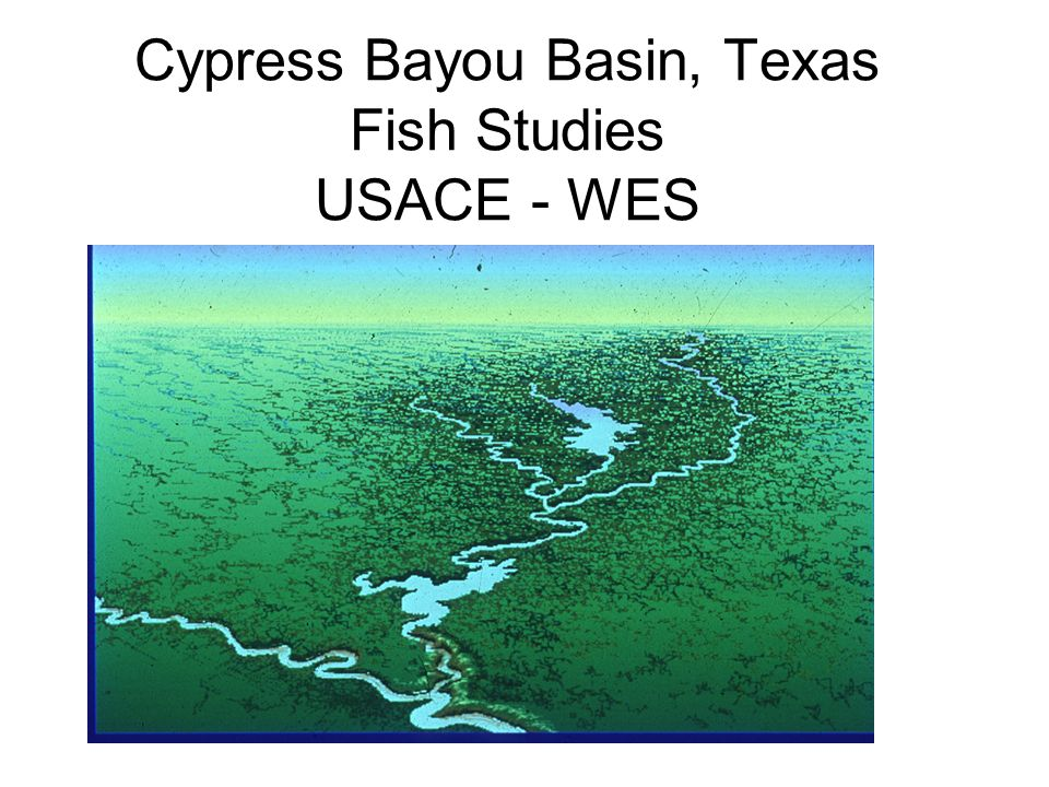 Cypress Bayou Basin, Texas Fish Studies USACE - WES