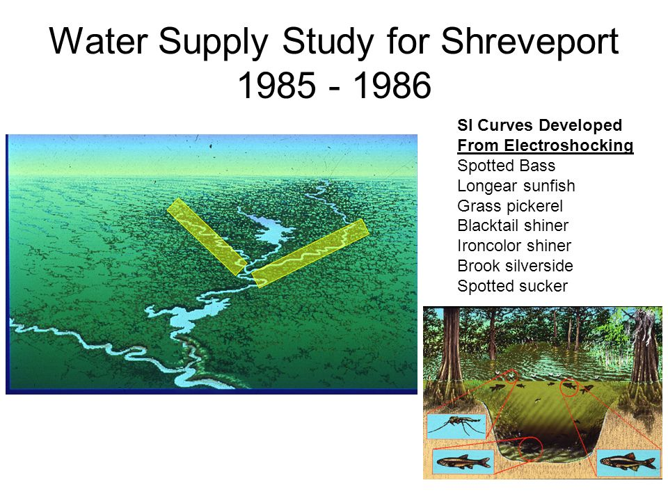 Water Supply Study for Shreveport 1985 - 1986 SI Curves Developed From Electroshocking Spotted Bass Longear sunfish Grass pickerel Blacktail shiner Ironcolor shiner Brook silverside Spotted sucker