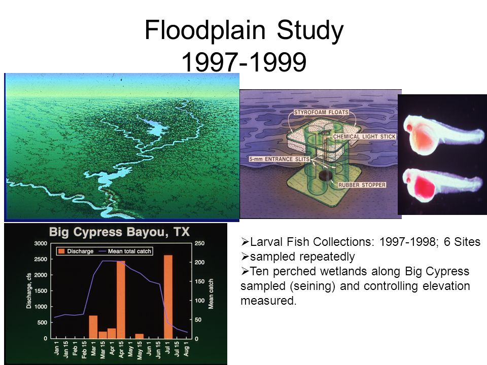 Floodplain Study 1997-1999 Larval Fish Collections: 1997-1998; 6 Sites sampled repeatedly Ten perched wetlands along Big Cypress sampled (seining) and controlling elevation measured.
