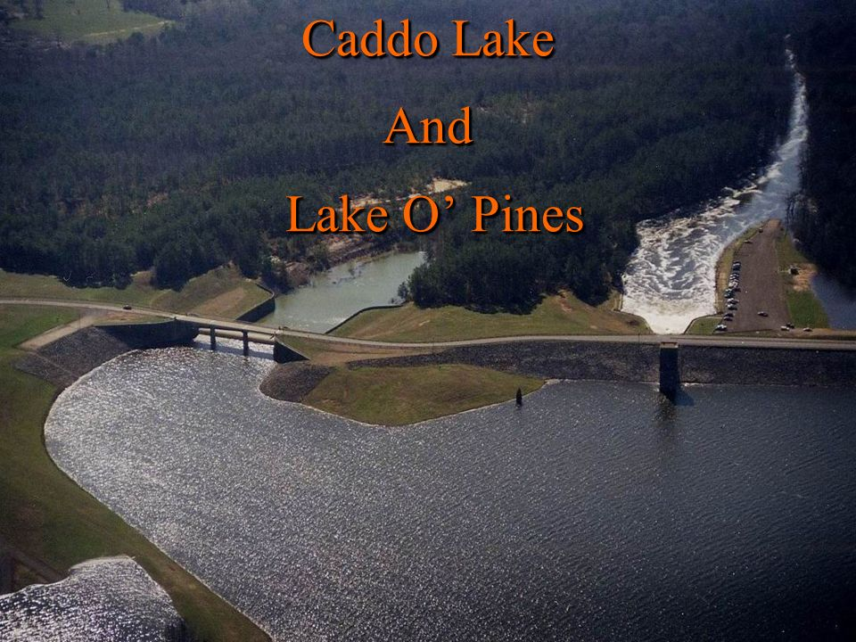 Caddo Lake And Lake O Pines