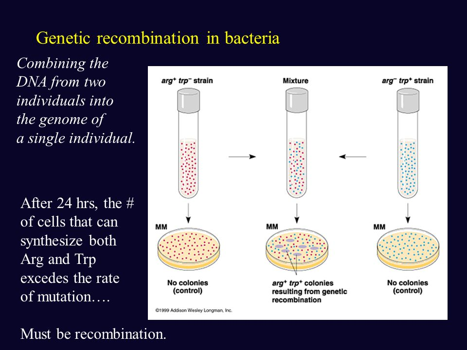 Bacteria Short generation time facilitates evolutionary adaptation. Binary fission -Asexual reproduction -under optimal conditions E. coli can reprodu