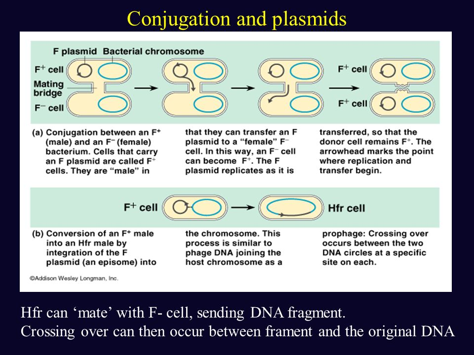 Plasmids Small self-replicating DNA molecule Can undergo reversible incorporation into the cells Chromosome…plays an important role in recombination E