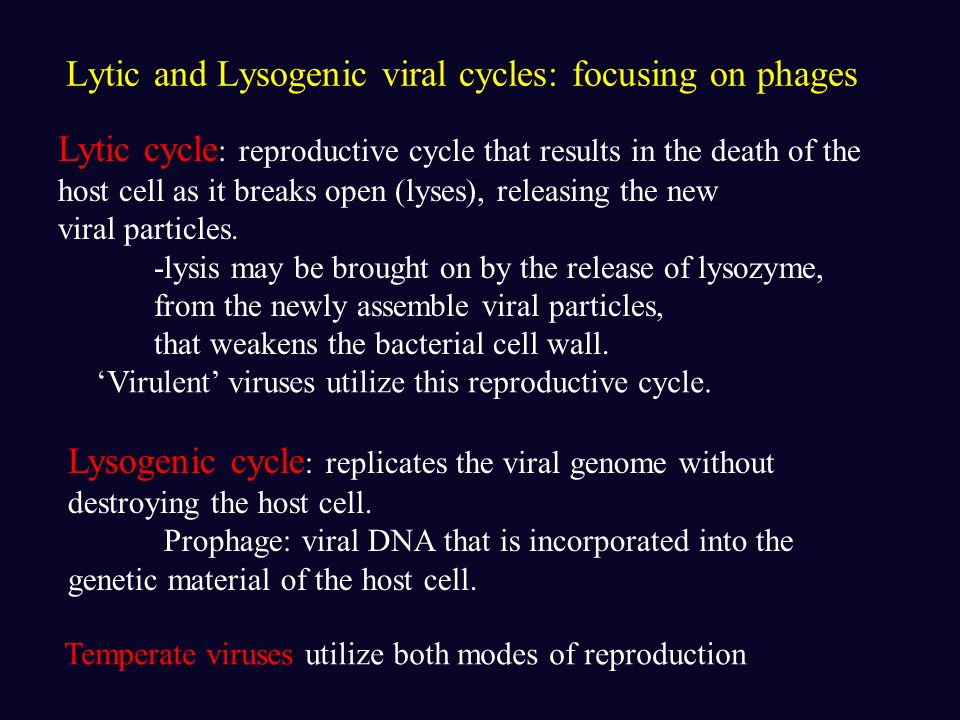 A generalized viral reproduction cycle