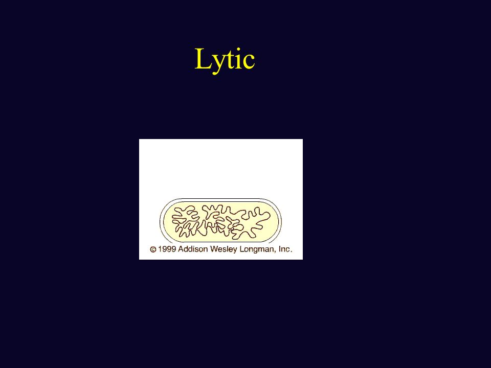 Lytic and Lysogenic viral cycles: focusing on phages Lytic cycle : reproductive cycle that results in the death of the host cell as it breaks open (ly