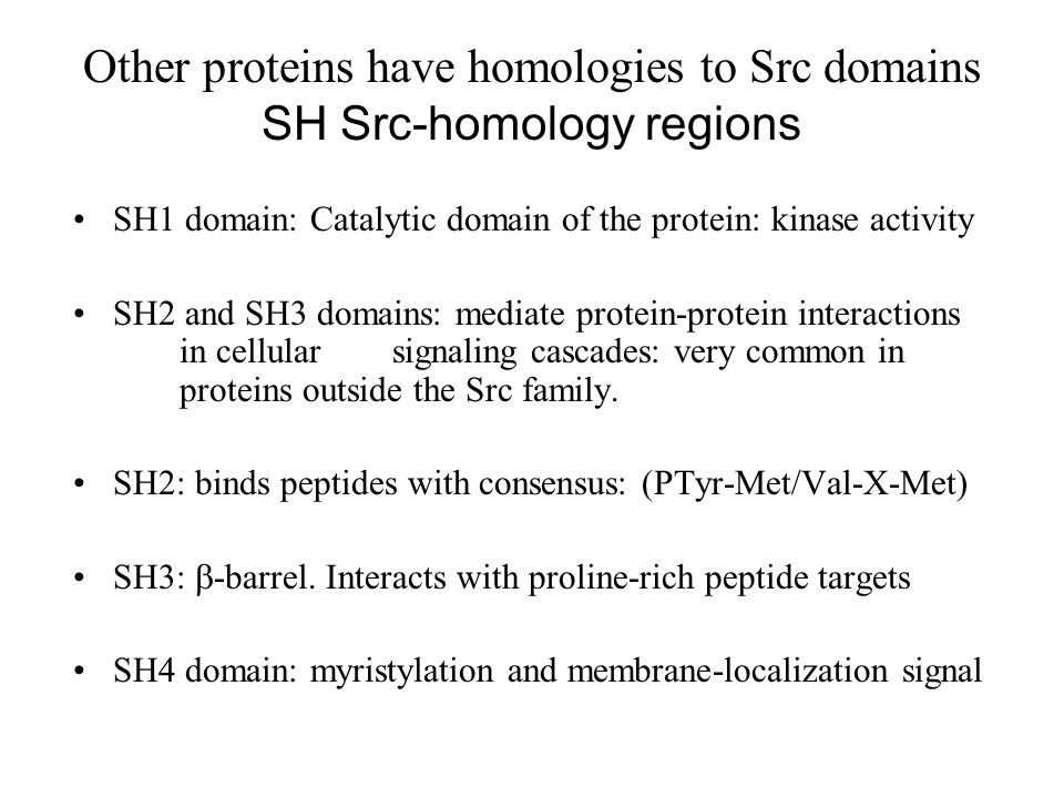 Other proteins have homologies to Src domains SH Src-homology regions SH1 domain: Catalytic domain of the protein: kinase activity SH2 and SH3 domains