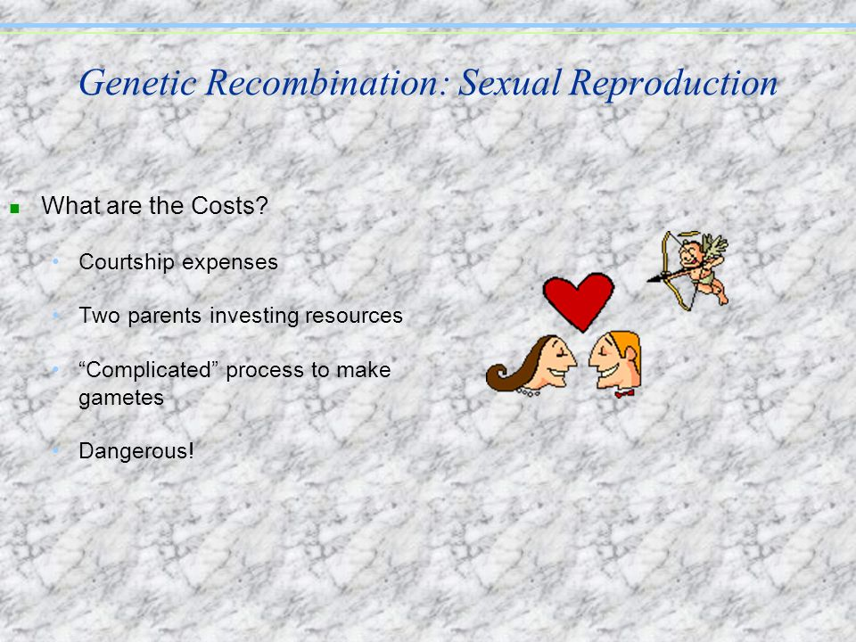 Genetic Recombination: Sexual Reproduction n What are the Costs? Courtship expenses Two parents investing resources Complicated process to make gamete