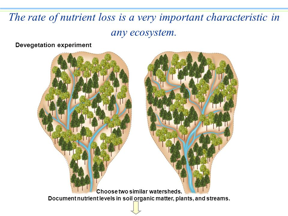 Devegetation experiment Choose two similar watersheds. Document nutrient levels in soil organic matter, plants, and streams. The rate of nutrient loss