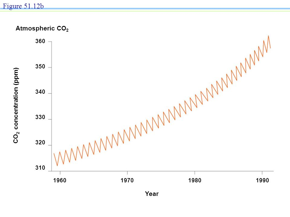 Year CO 2 concentration (ppm) 360 350 340 330 320 310 1960197019801990 Figure 51.12b Atmospheric CO 2