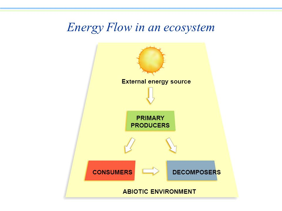 External energy source PRIMARY PRODUCERS CONSUMERSDECOMPOSERS ABIOTIC ENVIRONMENT Energy Flow in an ecosystem