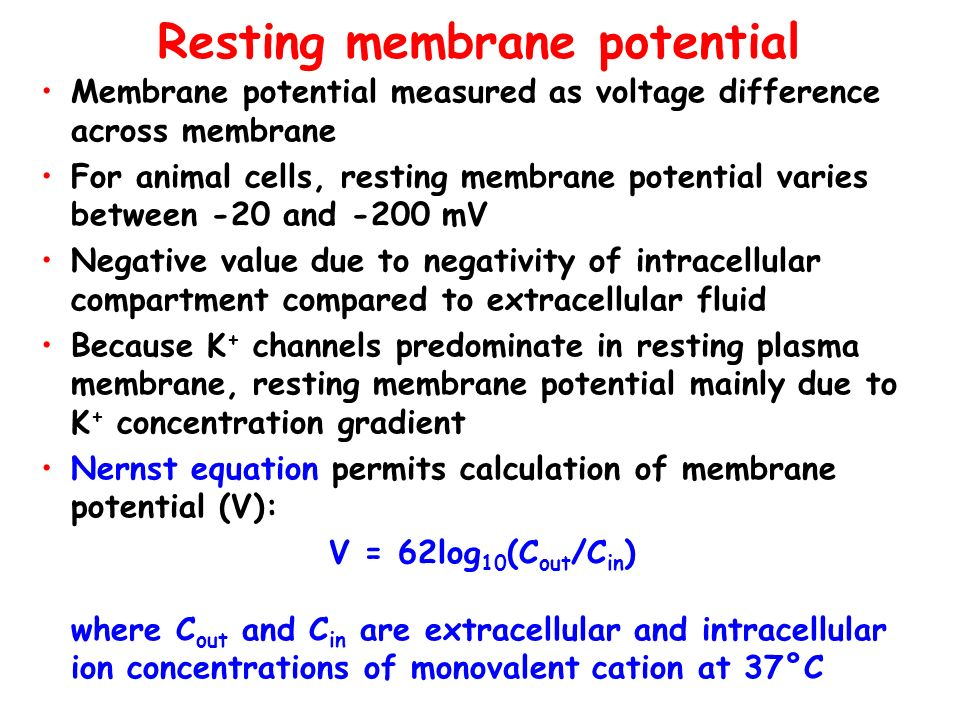 Resting membrane potential Membrane potential measured as voltage difference across membrane For animal cells, resting membrane potential varies betwe