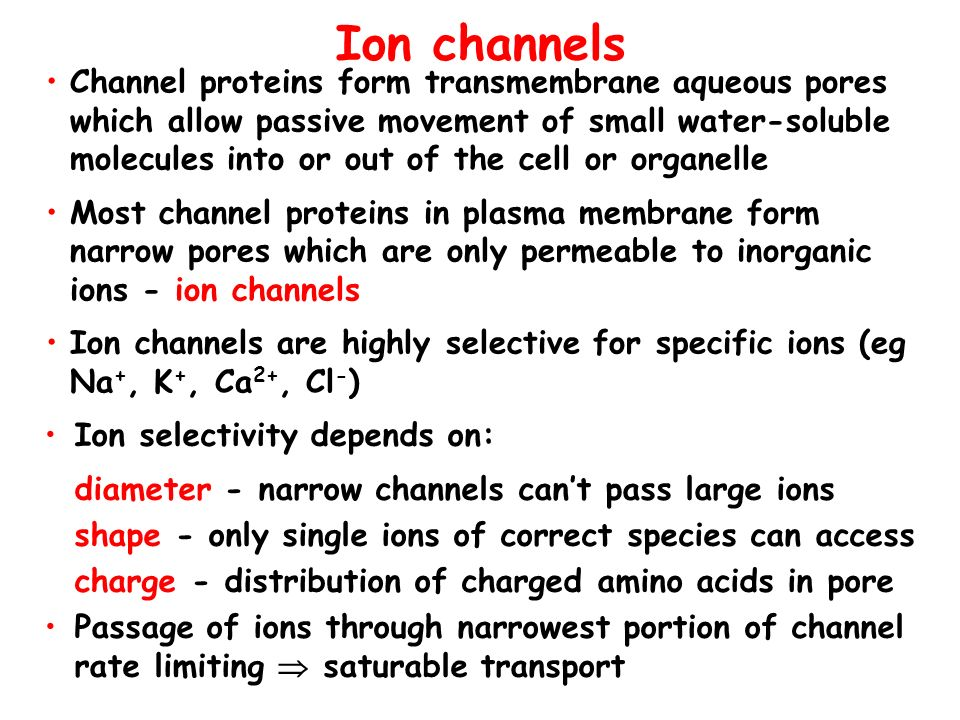 Ion channels Channel proteins form transmembrane aqueous pores which allow passive movement of small water-soluble molecules into or out of the cell o