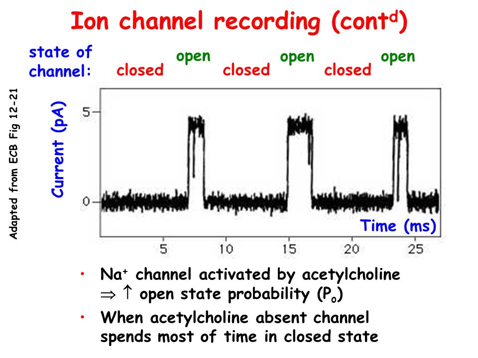 Ion channel recording (cont d ) Current (pA) Time (ms) state of channel: closed open closed open closed open Na + channel activated by acetylcholine o