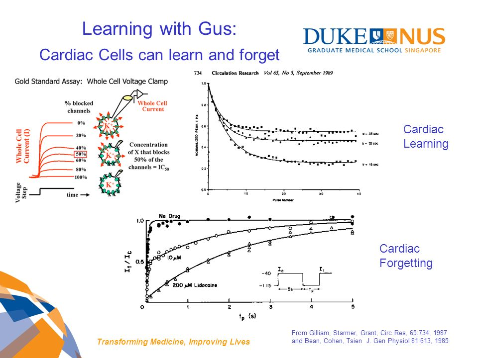 Learning with Gus: Cardiac Cells can learn and forget From Gilliam, Starmer, Grant, Circ Res, 65:734, 1987 and Bean, Cohen, Tsien J.