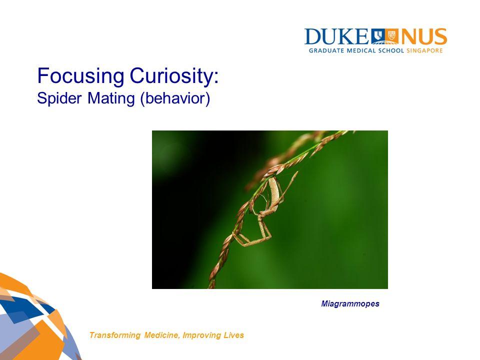 Focusing Curiosity: Spider Mating (behavior) Miagrammopes Transforming Medicine, Improving Lives