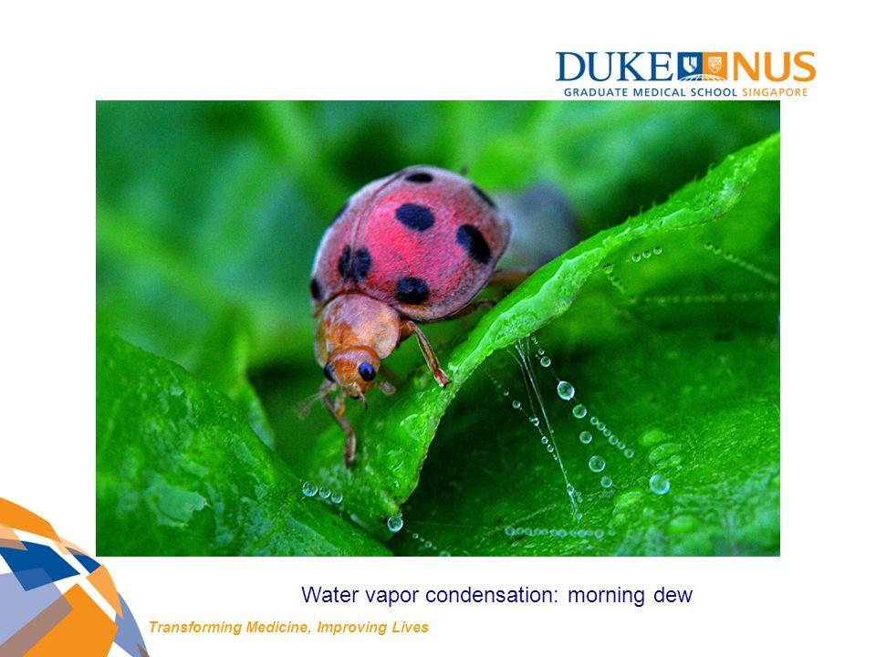 Water vapor condensation: morning dew Transforming Medicine, Improving Lives